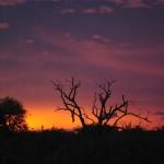 Sunset in Mahlathini